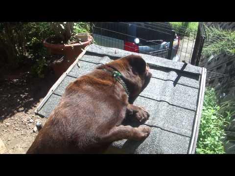 チャレンジ中の犬!!  He is smart dog!! Don't  you think?