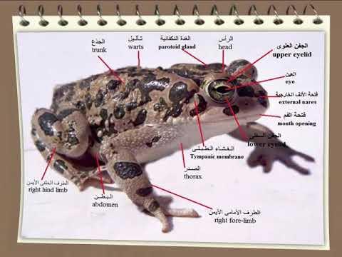 كتاب بيولوجية الحيوان العملية الجزء الاول pdf