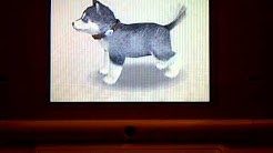 How to Name Ur Nintendog