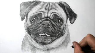 How To Draw A Dog - Pug