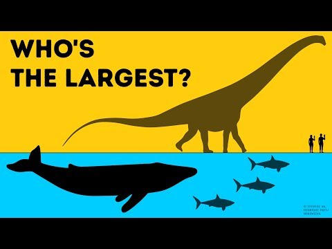 Who Is the Largest on Earth?