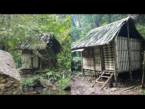 VIDEO: Six months of survival in the tropical rainforest