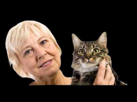 Cat Trick Deactivate a Cat-Cat Behavior