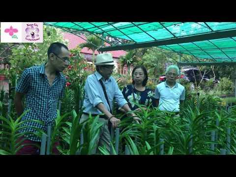 Xuyen Chi Orchid - Thầy Tám Ngọc thăm vườn lan Mokara ĐỘC NHẤT VÔ NHỊ tại miền Bắc - VOS