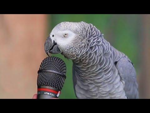 أذكى 8 حيوانات في العالم , ستندهش من شدة ذكائها  - نشر قبل 29 دقيقة