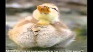 821 бесплатные видео приколы +про животных