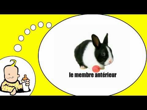 Frans leren met mij = het konijn