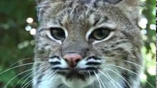 Big Cat Rescue 2008!!!