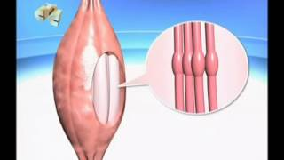 видео Болят мышцы груди :: SportCompleks.com