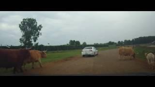 Driving through African Safari Wildlife Park - Port Clinton, Ohio