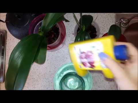Удобряем орхидеи Фаленопсис