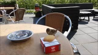 Bird liked my cookie...