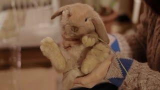Holland lop baby bunny come - ホーランドロップの赤ちゃんがやって来た