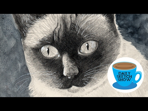 Daily Sketch Show - Siamese Cat