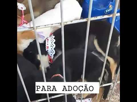 Exposição de cães de tanhaçu(4)
