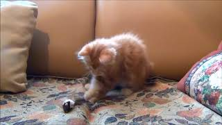 Cute Cats Compilation