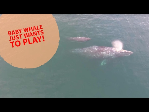 Baby Whale just wants to play!