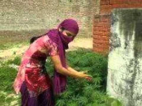 Sexy Kuri Punjabi