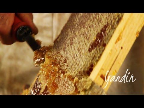 La smielatura del miele di melata
