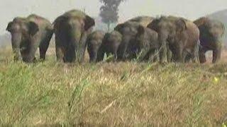 One dies as a group of wild elephants enter Bihar