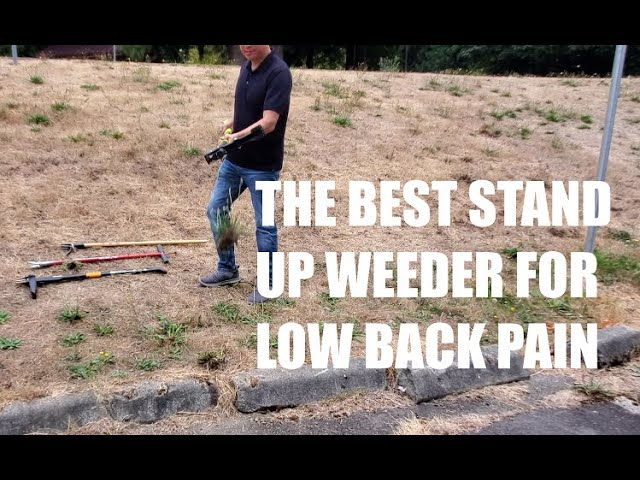 The Best Stand Up Weeder For Low Back Pain
