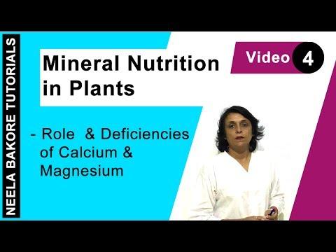Mineral Nutrition In Plants - Role & Deficiencies Of Calcium & Magnesium