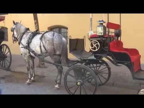Vlog 10, Paseo en Carruaje Córdoba Capital