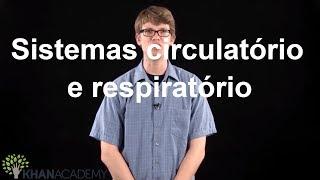 Respiratório proteger circulatório órgãos sistema de os 3 e do maneiras