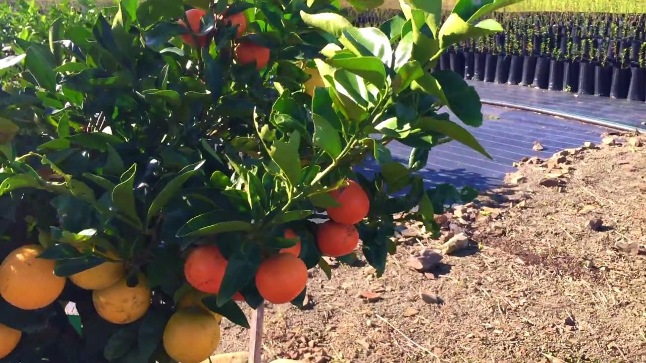 Image result for fruit salad tree