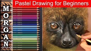 Pastel Drawing Beginners Wildlife Art Techniques Jason Morgan