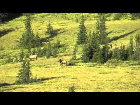 Elk Hunting In Canada
