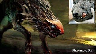 Необычные животные. Неизвестные виды