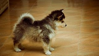 Funniest Puppy Fights and Funny Fails - Top 10 Funny Little Dog Videos - Puppy Vines 2015