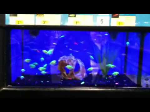 Glow in the dark fish at petco rave fishes youtube for Glow in dark fish