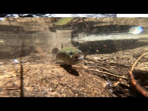 How To Fish Panther Martin [ Inline Spinners ] Fishing For Trout