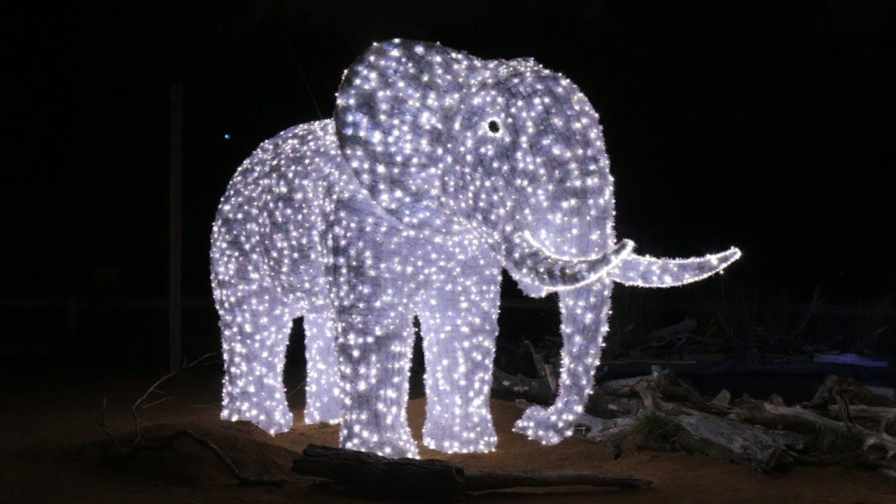 A Wild New Holiday Tradition Dallas Zoo Lights Youtube