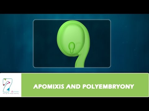 Apomixis vs asexual reproduction images