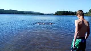 Ruby zwemt in Zweedse wateren (3)