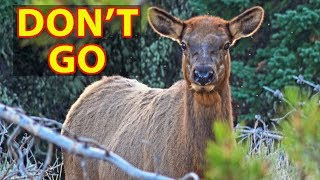 Why NOT to Visit Grand Teton National Park -- DON'T GO!!!!!