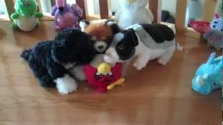 Angry Birds VS. Webkinz! War on Two Fronts!