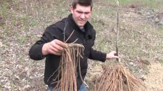 What We Found When We Dug Up a 15+ Year Old Asparagus was AMAZING