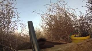 Охота на гуся в Крыму
