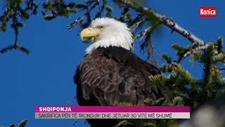 Gambar cover Sakrifica e shqiponjës tonë!