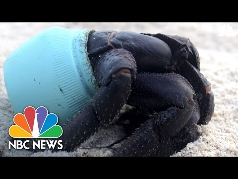 'Most Densely Polluted Place On Earth': Tons Of Plastic Washes Up On Remote Island | NBC News
