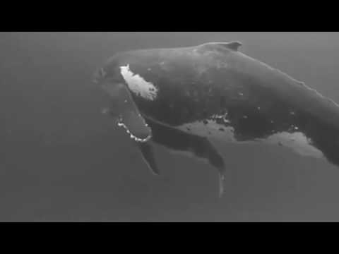 SEVENDOORS PRESENTS - SOUND OF THE WHALES