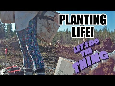 Tree Planting 2018 - A Day In The Life