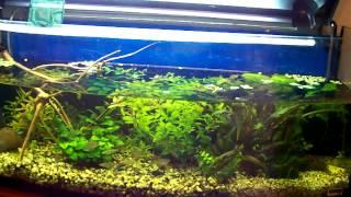 Подмена воды в аквариуме и уборка.(Это видео создано с помощью видеоредактора YouTube (http://www.youtube.com/editor), 2013-10-21T16:25:05.000Z)