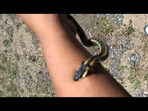 Catching garden snakes(1) - YouTube