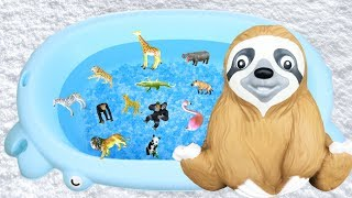 Wild Zoo Animal Toys for Kids - Learn Animals Names | Lum Sum Kids