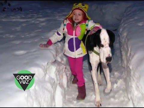 Little girl and giant dog form heartwarming bond